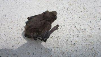 bat0724b.jpg