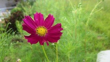 garden0921a.jpg