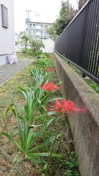 garden0921h.jpg