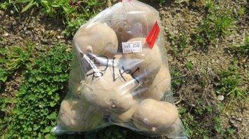 potato0213a.jpg