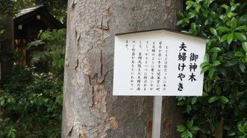 shinmeigu5.jpg