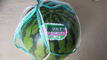 w_melon01.jpg