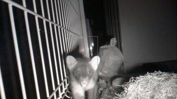 weasel0916f.jpg